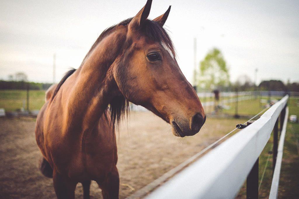 Paardensportvereniging de Peelruiters